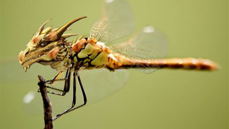 dragonfly_wierd_fly_birds_dragons_sexy_insects-hd-wallpaper-566403