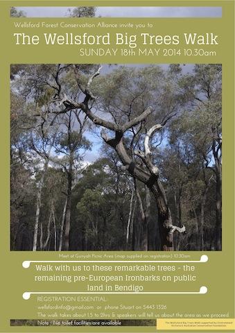 The Wellsford Big Trees Walk